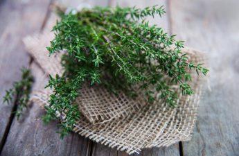 Эта трава активно борется с герпесом, гриппом, стрептококком и кандидозом
