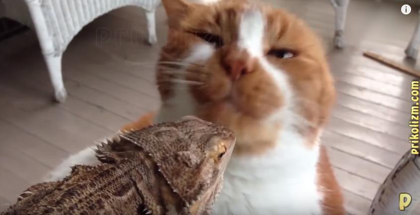 Лучшие приколы лета с котами. Попробуйте не рассмеяться!