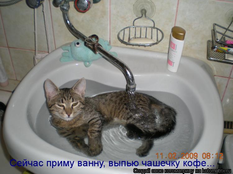 Смешная история про полосатого добытчика))