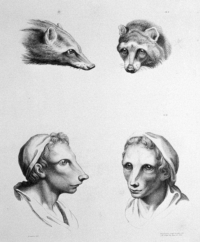 Художник показал как бы выглядели люди, если бы произошли от других животных
