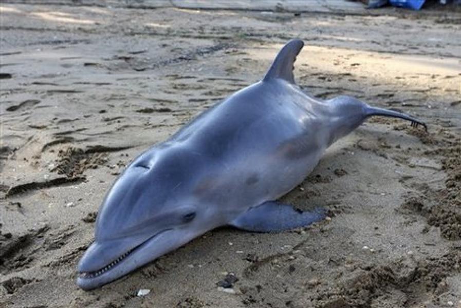 Он просто снимал море и пляж, и вдруг увидел дельфинов на берегу