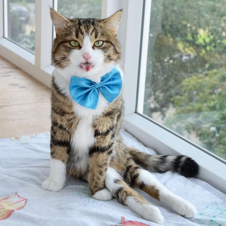 Приятно познакомиться: это Рекси - котик с высунутым языком!