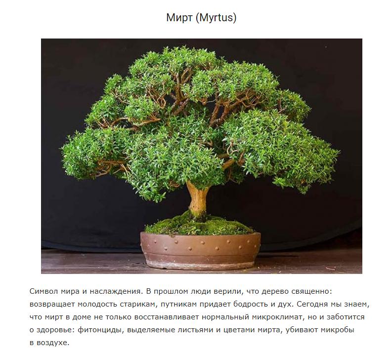 5 растений для идеального микроклимата дома