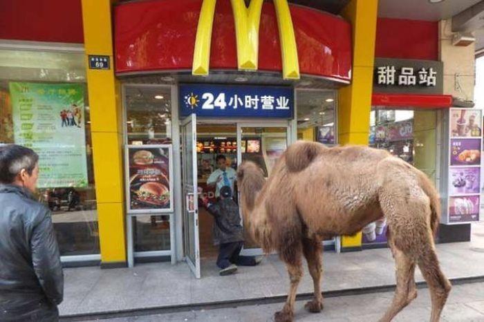 Откровения сотрудников «Макдональдс» - почему нужно всегда просить чек на кассе